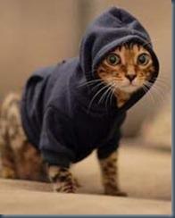толстовка для котенка